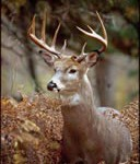 Wisconsin Deer hunting has some significant changes in 2014