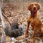 Wisconsin Wild Turkey and Dog